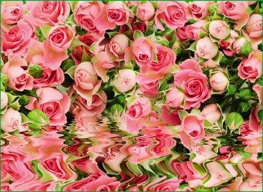 Фотообои 8 листов VIP Великолепие оптом