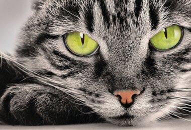 Фотообои 4 листов VIP Кошка оптом