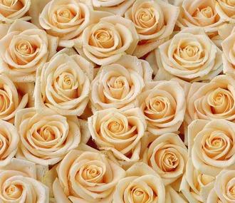 Фотообои Artdecor 15 листов Розы оптом